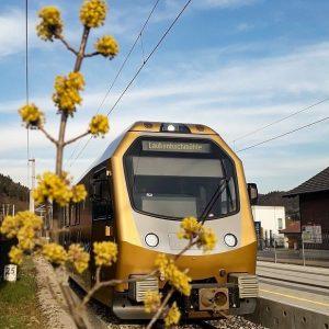 Es blüht und grünt an der Mariazellerbahn 💚🌿 Wir wünschen euch frohe Osterfeiertage! 🐰 #mariazellerbahn #himmelstreppe @niederoesterreich_bahnen...